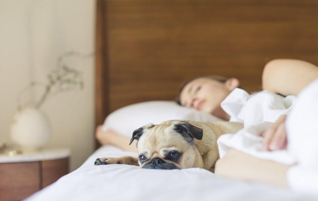 18 tips om makkelijker in slaap te komen voor een goede nachtrust. Hoe kan je makkelijker in slaap komen